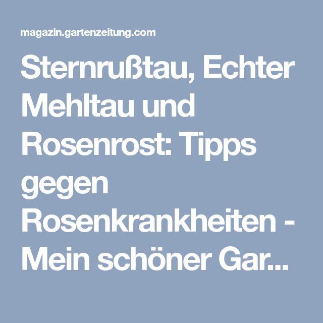 Sternrußtau, Echter Mehltau und Rosenrost: Tipps gegen Rosenkrankheiten - Mein schöner Garten