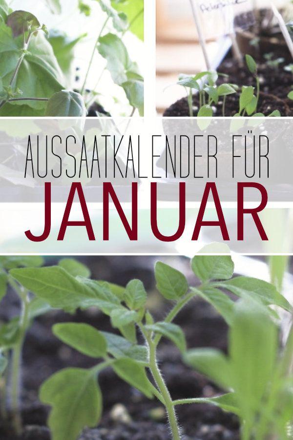 Aussaatkalender Januar Was Du Jetzt Schon Saen Kannst In 2021 Gemuse Pflanzen Pflanzkalender Aussaat Kalender