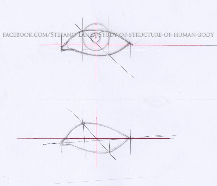 https://www.facebook.com/Stefano-Lanza-Study-of-structure-of-human-body-1479159998770051/ #anatomy #anatomia #draw  #drawing #eye #art #disegno