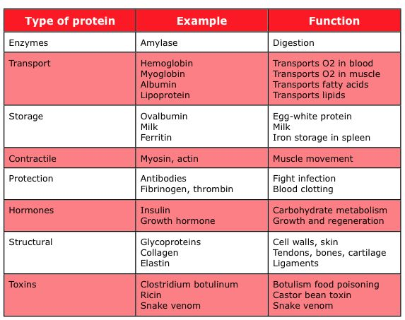 These are the types of proteins and their many functions ...