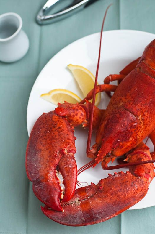 ideas about Steamed Lobster on Pinterest | Lobster Recipes, Lobsters ...