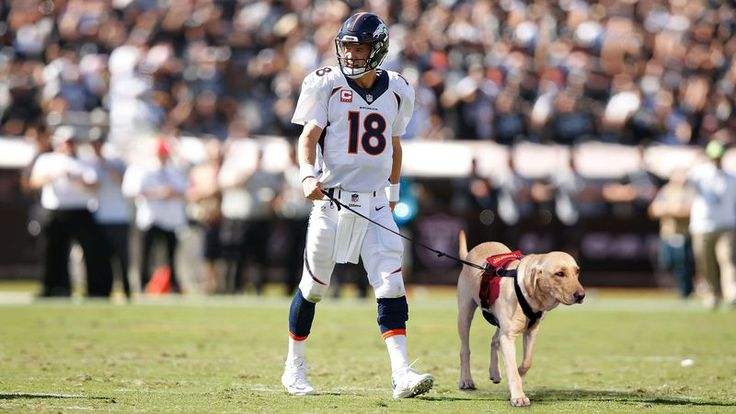 Aging Peyton Manning Now Forced To Take Field With Assistance Dog