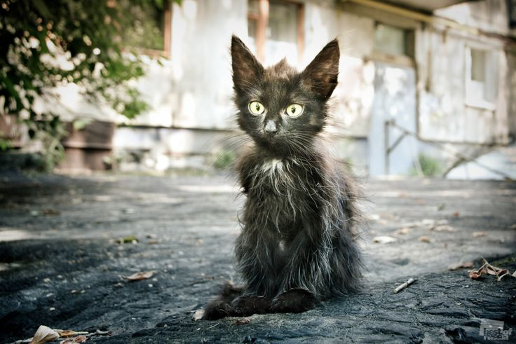 : Happy Friday, Kitty Cat, Cute Cat, Kittens, Little Baby, Dogs Life, Poor Baby, Black Cat, Animal