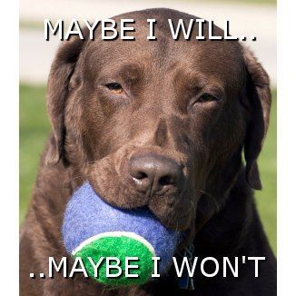 Image result for disobedient dog meme