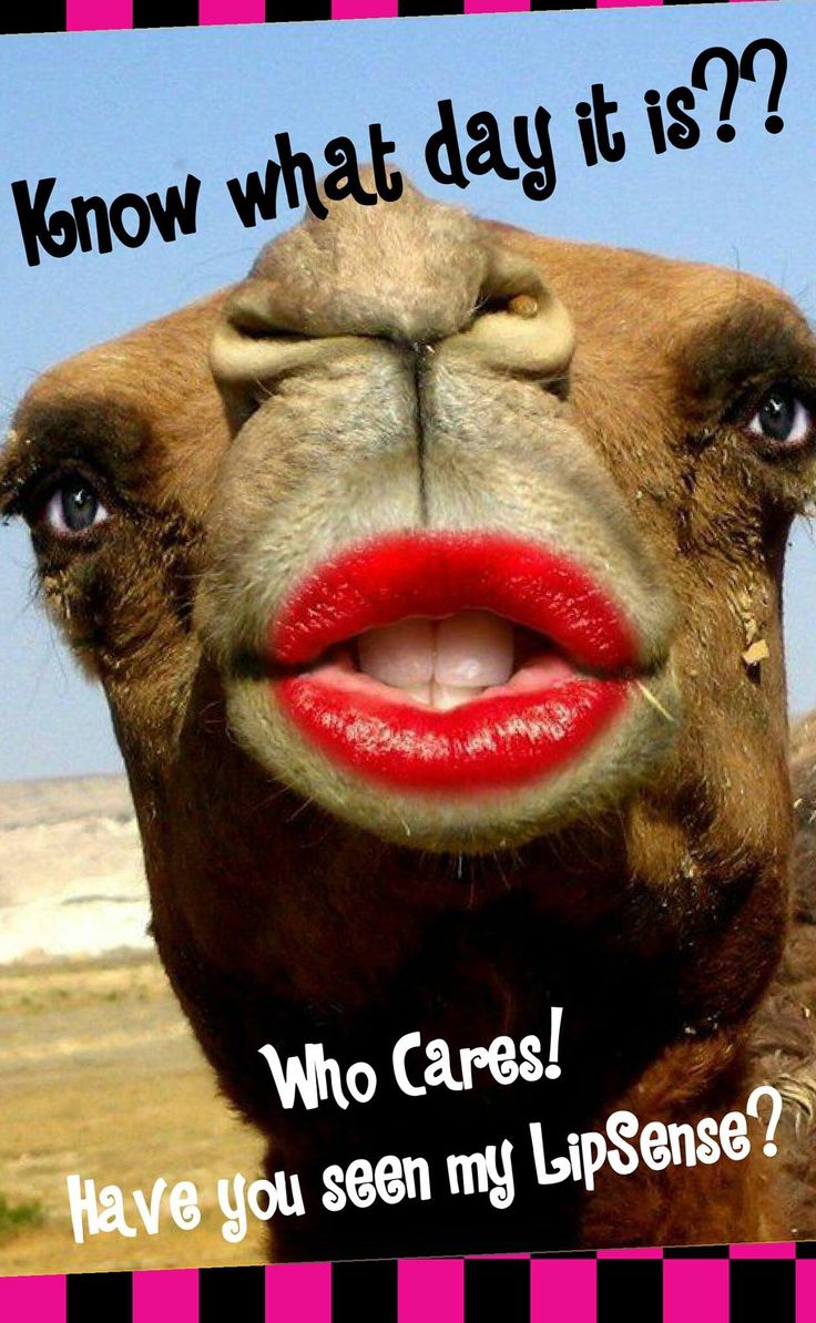 Guess what day it is...its hump day! Always look good with SeneGence lipstick. Www.senegence.com/letsmakeup