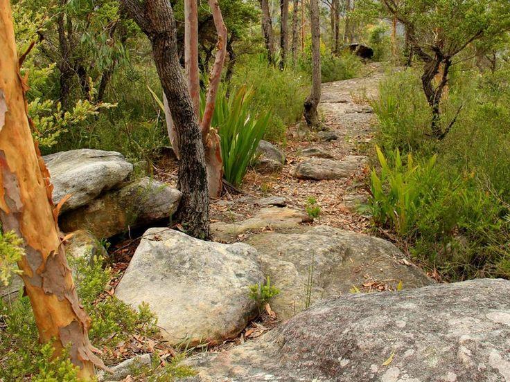Mount Olive Track, Popran National Park. Photo: John Yurasek