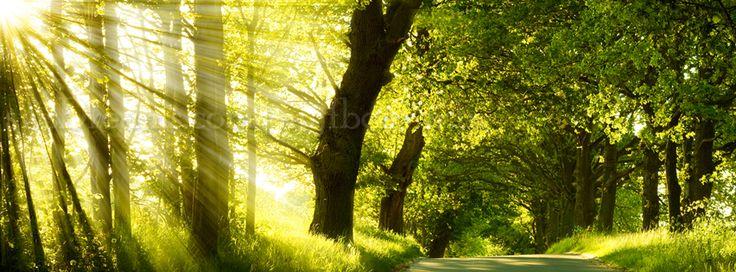 Facebook Cover photos #nature #facebook #original #cover # ...