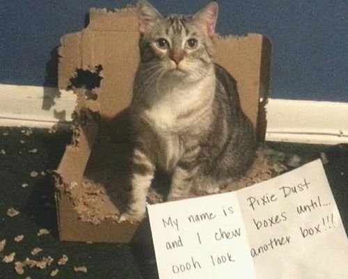 Best CAT Shaming Images On Pinterest Kitty Cat Stuff And Cats - 27 cats who made hilariously poor life choices