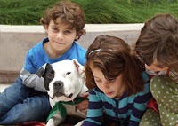 To Hell and Back—Michael Vick's pit bull's are therapy dogs. Rot in hell, mike!