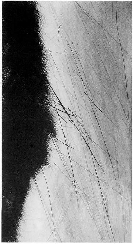 Strazza Guido(Italian, b.1922) via