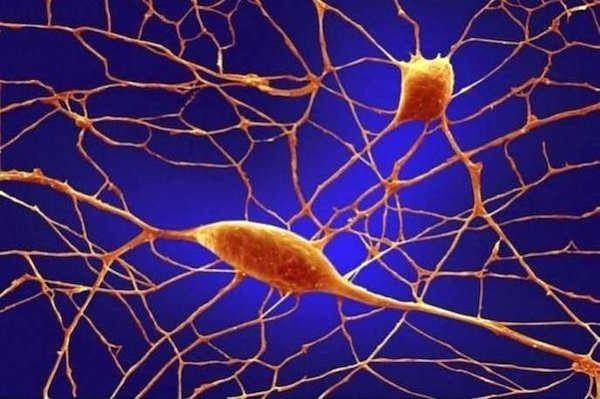 Человеческое тело под микроскопом