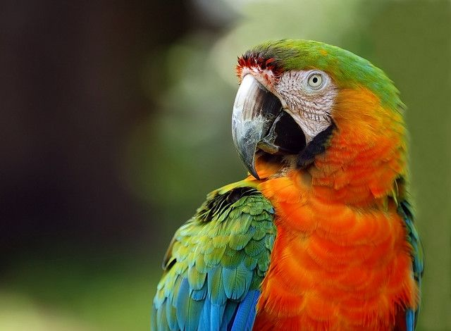 taming a parrot Training information and advice on raising a pet eclectus parrot if you need more information, check out our blog.