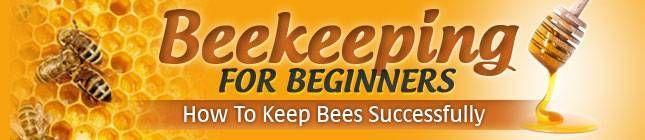 Raising Honey Bees   Honey Bees Farming   Raising Honey Bees For Beginners