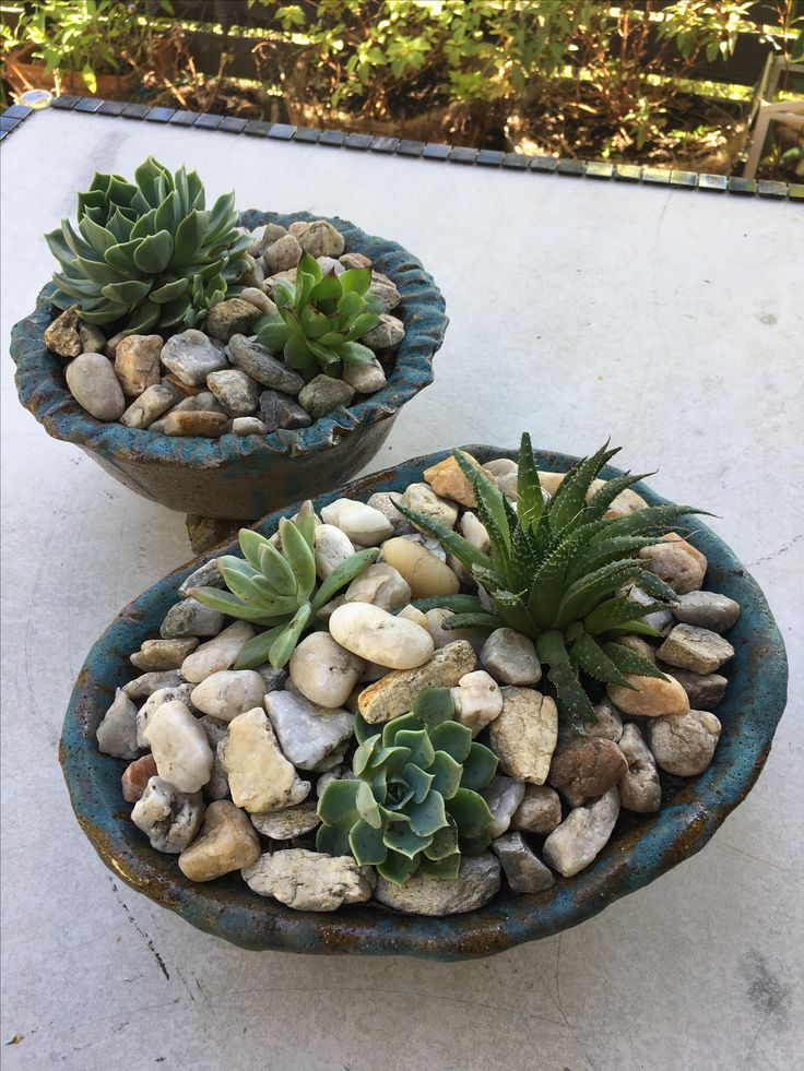 Handmade ceramic bowls are perfect for these succulents.