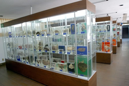 Museo de Anatomia Patologica Animal