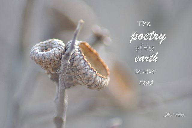 The poetry of the earth is never dead. ~ John Keats