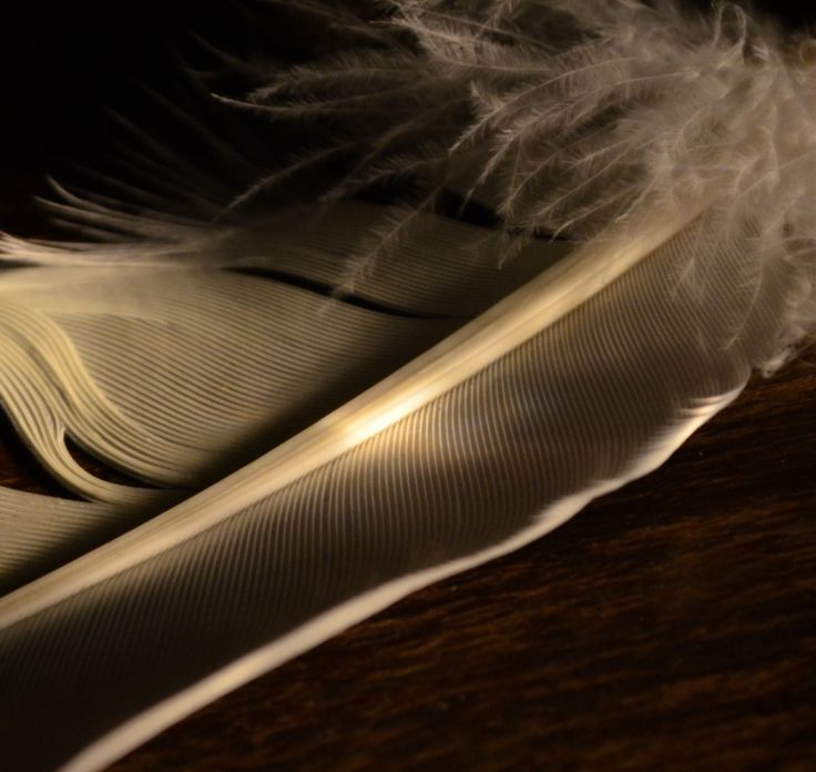 Chiaroscuro Photography Feather by Fiona Groom