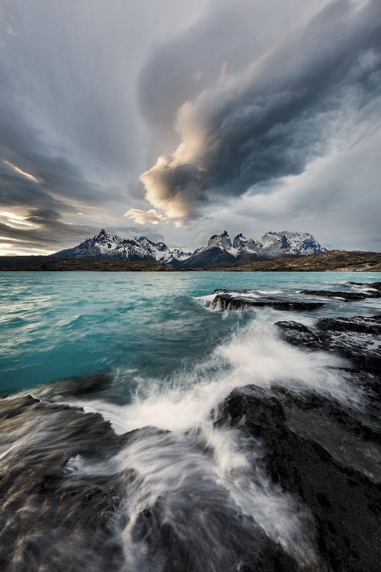 "tulipnight: "" Whisper of Paine by Ian Plant """