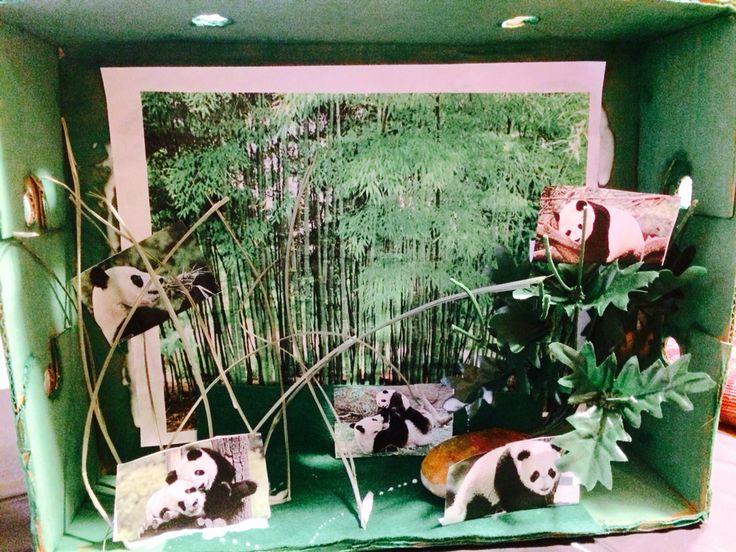 Panda School Project Pandas habitat