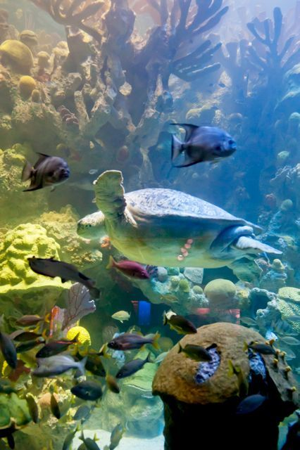 New England Aquarium Giant Ocean Tank
