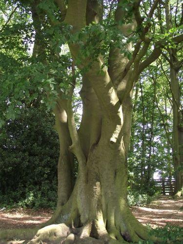 Bedfords Park, Havering-Atte-Bower, Essex - picture taken by me