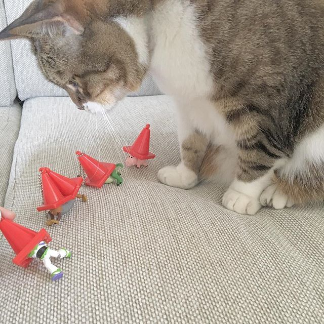 ㅤㅤㅤㅤㅤㅤㅤㅤㅤㅤㅤㅤㅤ ㅤㅤㅤㅤㅤㅤㅤㅤㅤㅤㅤㅤㅤ 👀??? ㅤㅤㅤㅤㅤㅤㅤㅤㅤㅤㅤㅤㅤ ㅤㅤㅤㅤㅤㅤㅤㅤㅤㅤㅤㅤㅤ #トイストーリー #おもちゃに夢中 #ねこ #猫 #ねこ部 #愛猫 #愛娘 #ねこすたぐらむ #にゃんすたぐらむ #保護猫 #女の子 #ももこはん日記 #猫好きさんと繋がりたい #猫のいる暮らし #トイストーリー2 #バズ #スリンキー #レックス #ハム #toystory