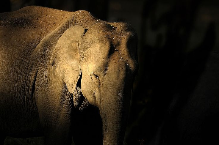elephant photo from Treehugger