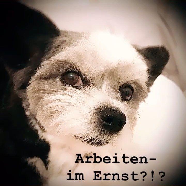 Manmanman Bella Ist Nicht Aus Den Federn Zu Bekommen Unicat Pforzheim Sedanplatz Buylocal Supportyourlocal Support Mode Fashion Boutiq In 2020 Animals Dogs