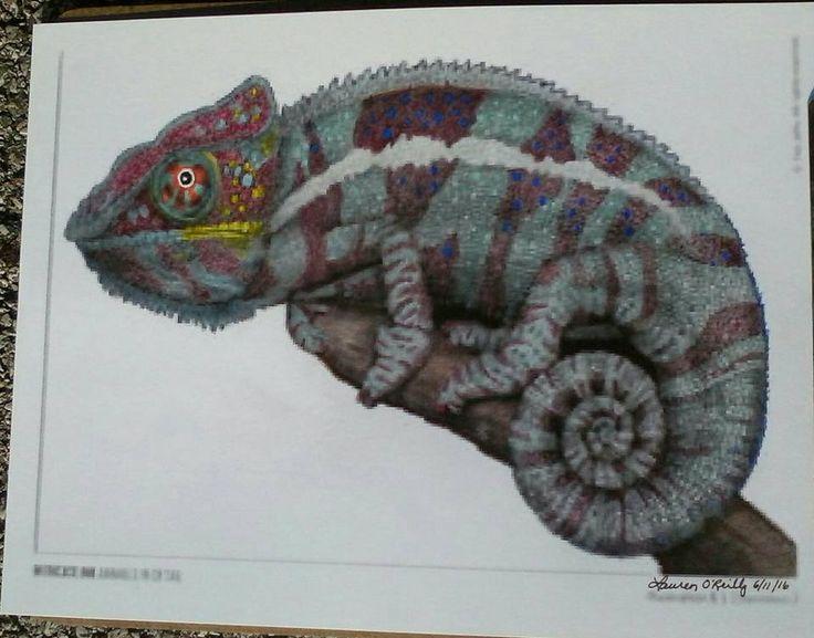 Chameleon Lauren A Coloring BooksChameleons