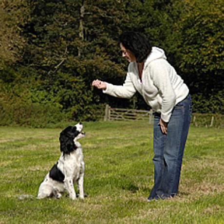 Basic Dog Commands and How to Teach Them | Dogster