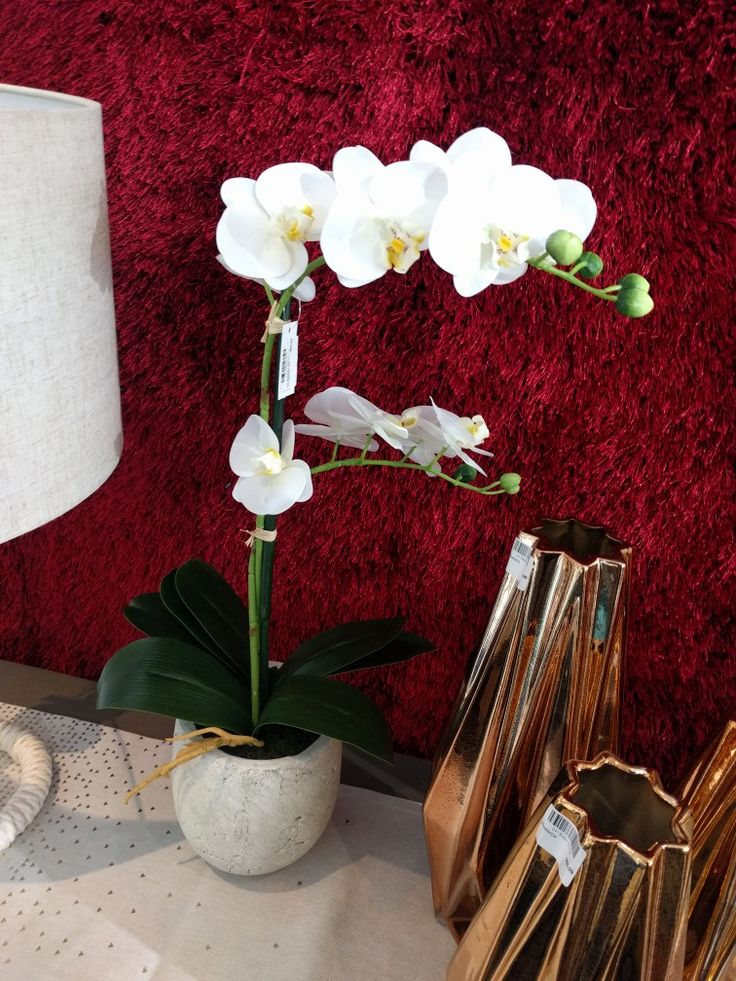 Moth orchid from design store 89
