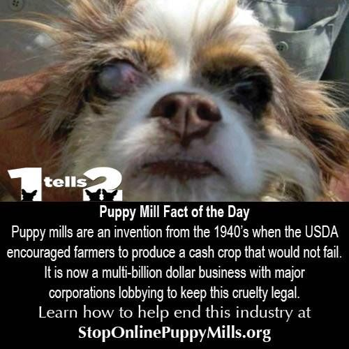One comment that we see over and over on the page is why is this legal? It is legal because puppy mills have money to influence legislatures. Dogs are big business. But we have more votes.... there are 164 MILLION households with a dog. Just imagine what would happen if we all voted for the dogs? Share the 1 Tells 2 Challenge and then start with your local and state representatives.... let them know that dog cruelty has to stop. Learn more at http://www.stoponlinepuppymills.org/1-tells-2/
