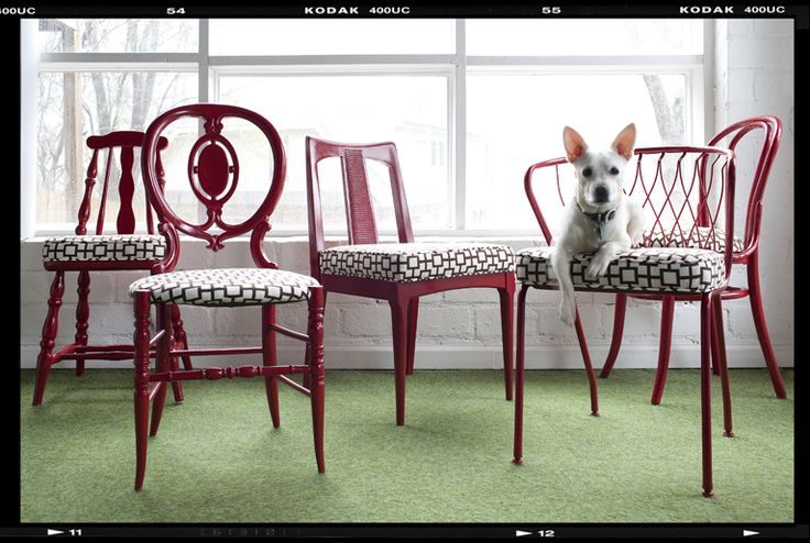 eclectic chairs tied together by the upholstery. #decordemon