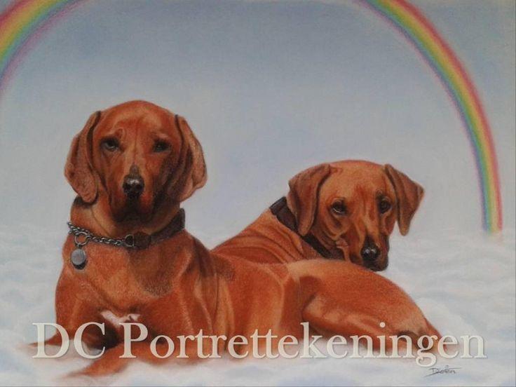 """Ridgebacks at the Rainbow Bridge"" realistic portrait drawing made with pastelpencils"