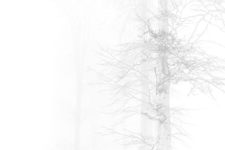 the fog by mircea bunea on 500px