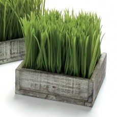 Distressed Planter with Potted Wheatgrass made by Garden Party Hostess.