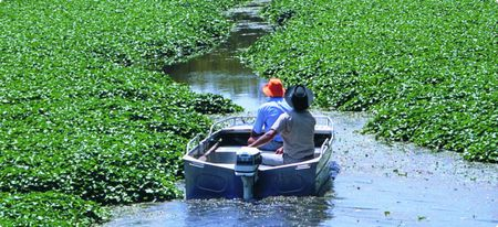 Types of aquatic plants and methods of aquatic weed removal As we all know that not every kind of weeds is harmful to lake and pond. So let's visit below link and find types of weeds and how to remove them.https://lakemower21weedcontrol.wordpress.com/2017/06/06/aquatic-plants-do-we-really-need-them/