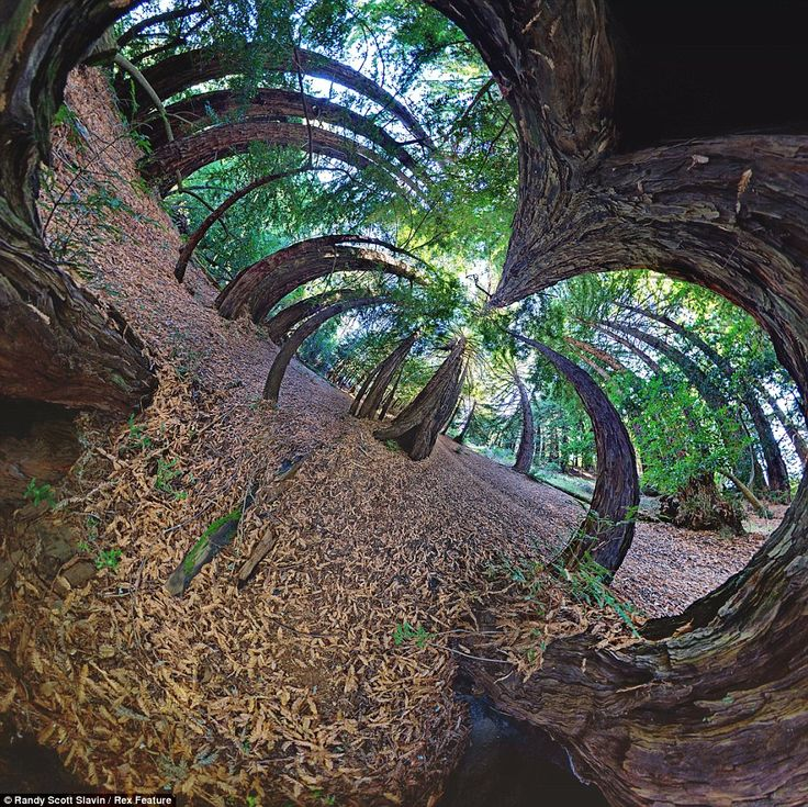 Technology is used to turn sometimes hundreds of pictures, in this case Redwood trees in Big Sur, California, into a single image