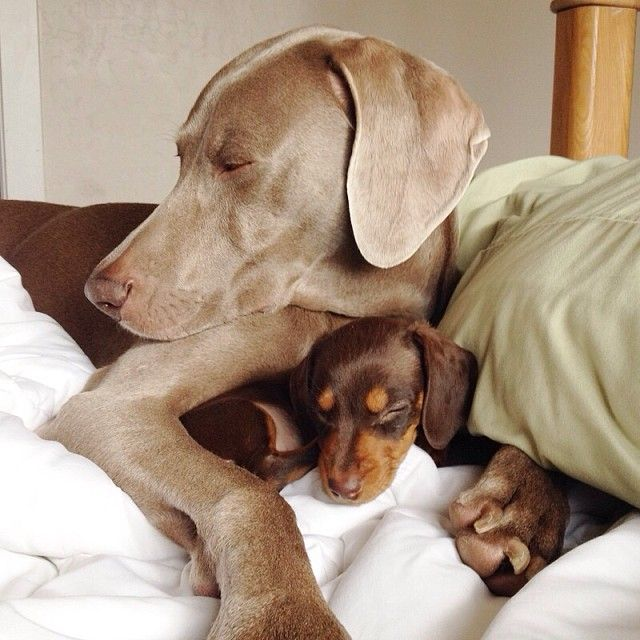 Big Dog and Small Pup Are Inseparable Best Friends - My Modern Met