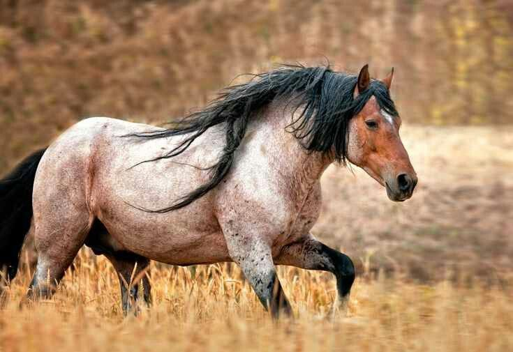 This mustang stallion named Freedom is absolutely stunning! He resides at Return to Freedom sanctuary in California