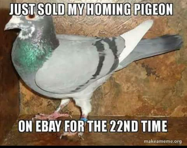 Funny Homing Pigeon For Sale eBay Meme Joke Picture