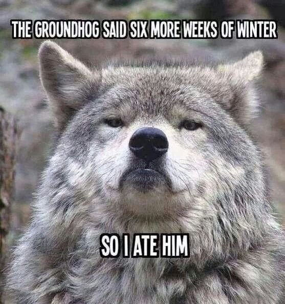 081a7f115ba71c98919911d595634769 groundhog day random things 90 best groundhog's day! images on pinterest ground hog, funny,Funny Groundhog Meme