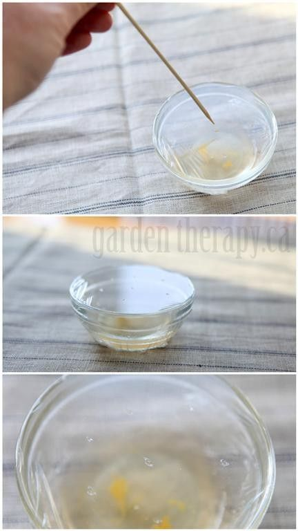 How to make a fruit fly trap - so easy and so effective! This works every time.