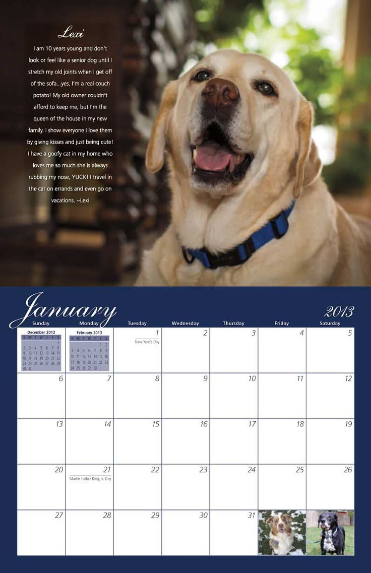 Calendar Dogs : Best images about dog rescue calendars on pinterest