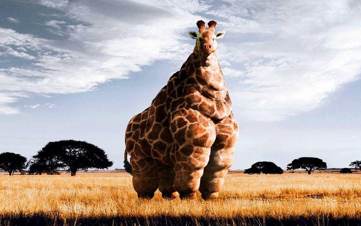 side effects of junk food :D