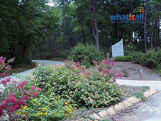 Die besten 25+ Laurel bush Ideen auf Pinterest Schnell wachsende - heckenpflanzen