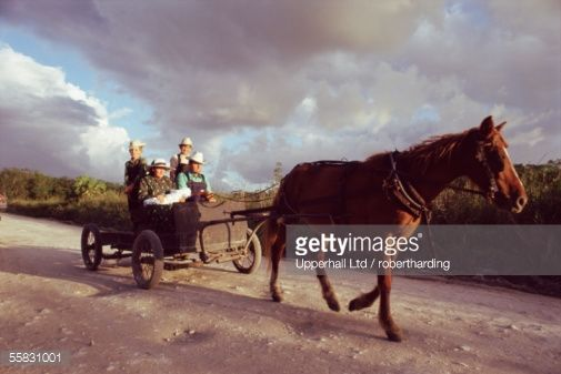 Stock Photo : Traditional Mennonite family with pony and trap, Camp 9, Shipyard, Belize, Central America