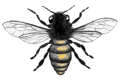 I think my next tattoo will be a BEE