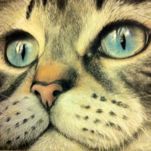 Blue eyes. Pastel on velour by jilltisbury.co.uk