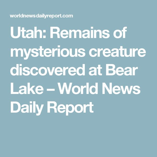 Utah: Remains of mysterious creature discovered at Bear Lake – World News Daily Report